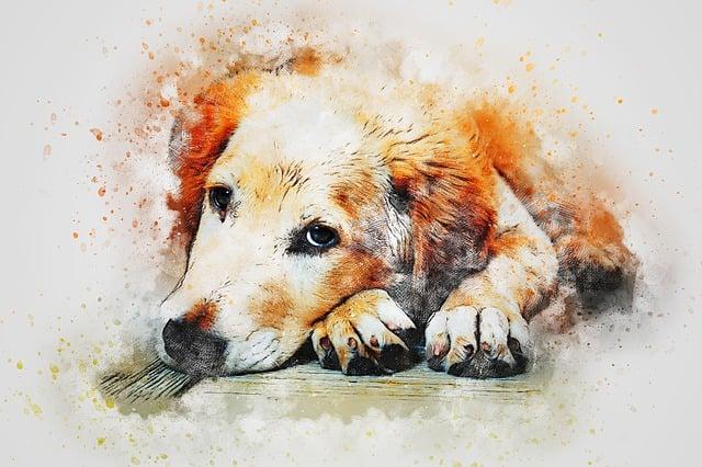Dog, Portrait, Cute, Animal, Watercolor, Vintage, Puppy