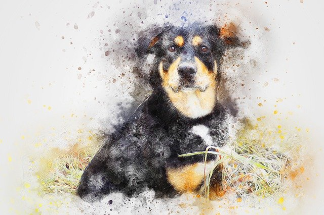Dog, Animal, Pet, Art, Abstract, Watercolor, Vintage