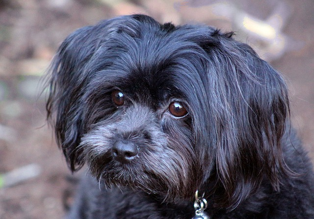 Wonderful Doggy Canine Adorable Dog - Doggy-Black-Dog-Adorable-Canine-Cute-Small-Puppy-2856576  Snapshot_77470  .jpg