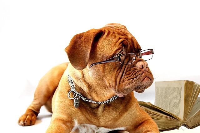 Dog, Dogue De Bordeaux, Mastiff, Bordeaux, Burgundy