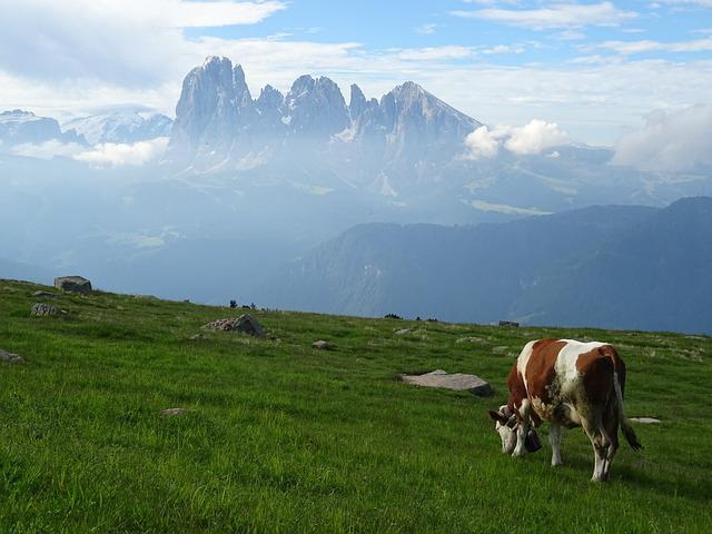 Dolomites, Panorama, Cow