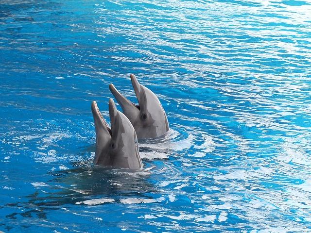 Dolphin, Dolphins, Cetacean, Marine Mammal