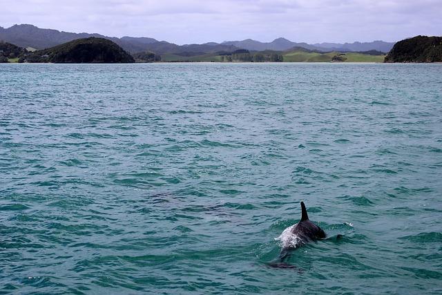 Sea, Dolphin, Meeresbewohner, Marine Mammals, Dolphins