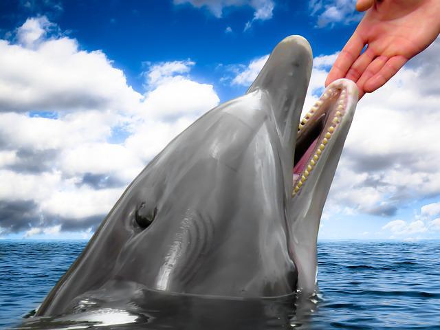 Dolphin, Mammal, Hand, Trust, Faith, Holding Hands