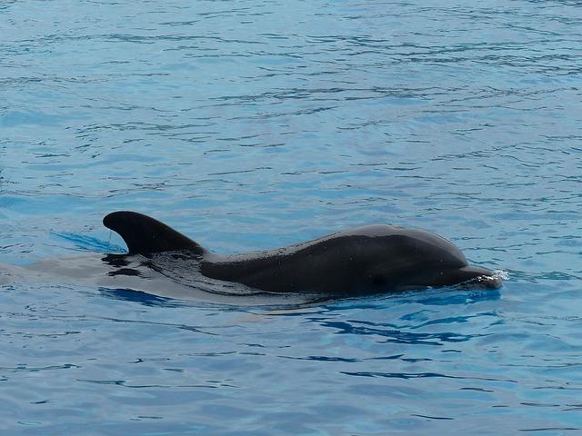 Dolphin, Dolphinarium, Swim, Water, Marine Animal