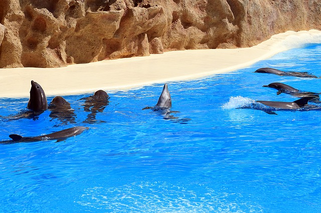 Dolphins, Tenerife, Loro Park, Preview, Water, Blue