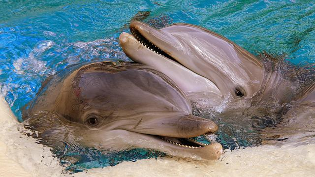 Dolphins, Usa, Las Vegas, Siegfried Roy, Nevada