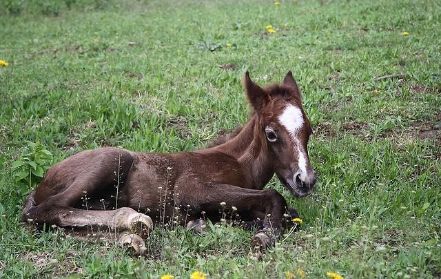 Animal, Equine, Foal, Birth, Domestic Animal, Horse