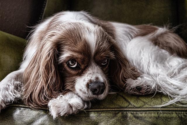 Dog, Eye, Face, Animal, Cute, Pet, Canine, Domestic