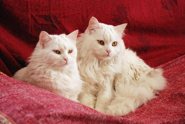 Cat, Cute, Animal, Domestic, Mammal, White, Portrait