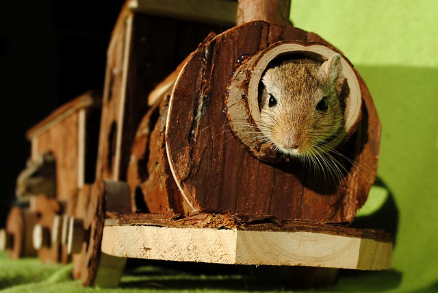 Domestic Animal, Rodent, Gerbil, Hiding Place, Games
