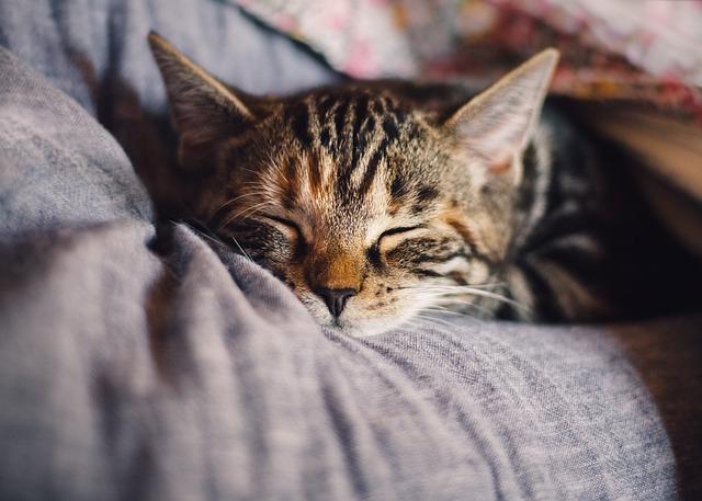 Cat, Domestic Cat, Mackerel, Sleep, Pet, Animal, Rest