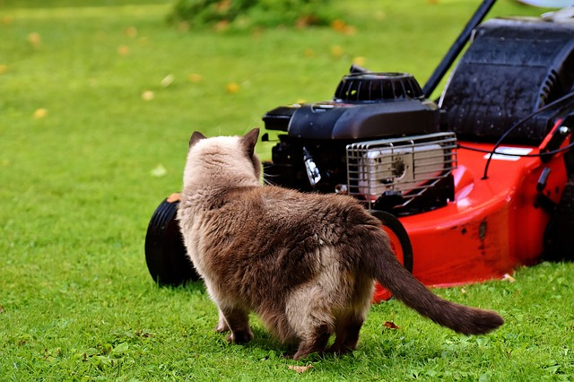 Lawn Mower, Cat, Curious, Rush, Meadow, Domestic Cat