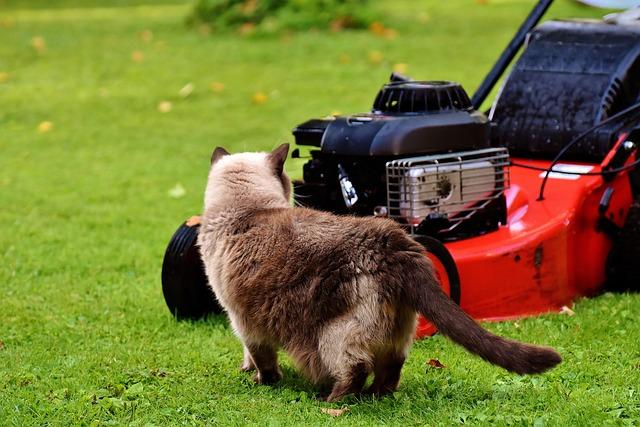 Lawn Mower, Cat, Curious, Rush, Meadow, Domestic Cat