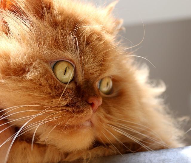 Animal, Cat, Cute, Kitten, Pet, Domestic Cat, Cat's Eye