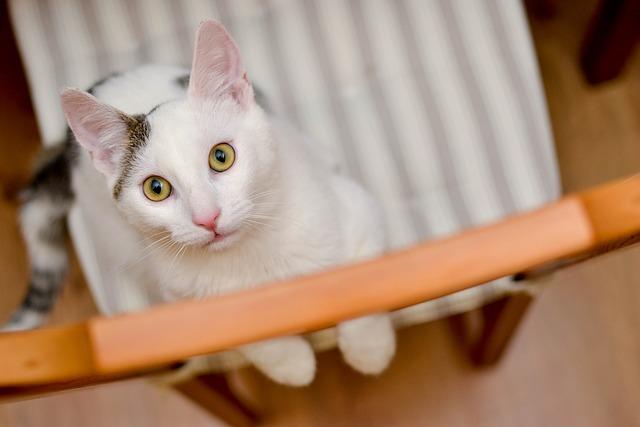 Cat, Domestic Cat, Pets, Sitting Cat, Cat's Eyes