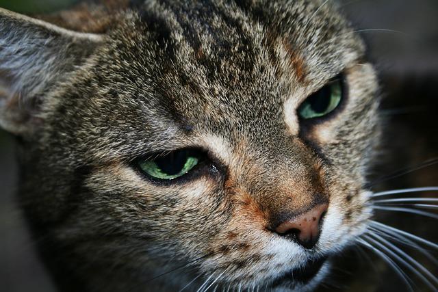 Cat, Mackerel, Tiger Cat, Mieze, Pet, Domestic Cat