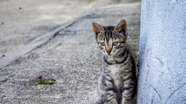 Animalia, Nature, Cat, Nice, Domestic