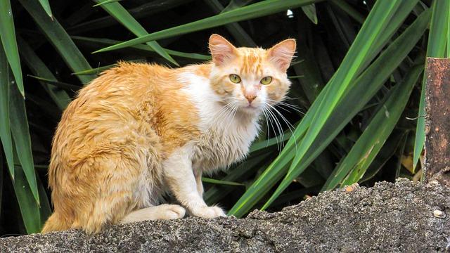 Cat, Feline, Animal, Domestic, Pet, Orange Cat