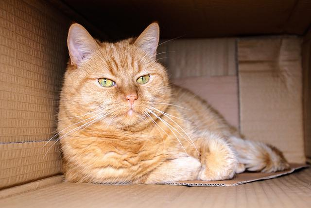 Cat, Red Cat, Kitten, Home, Pet, Domestic Cat, Mackerel