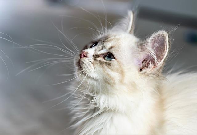 Cat, Domestic Cat, Young Cat, Kitten, Animal