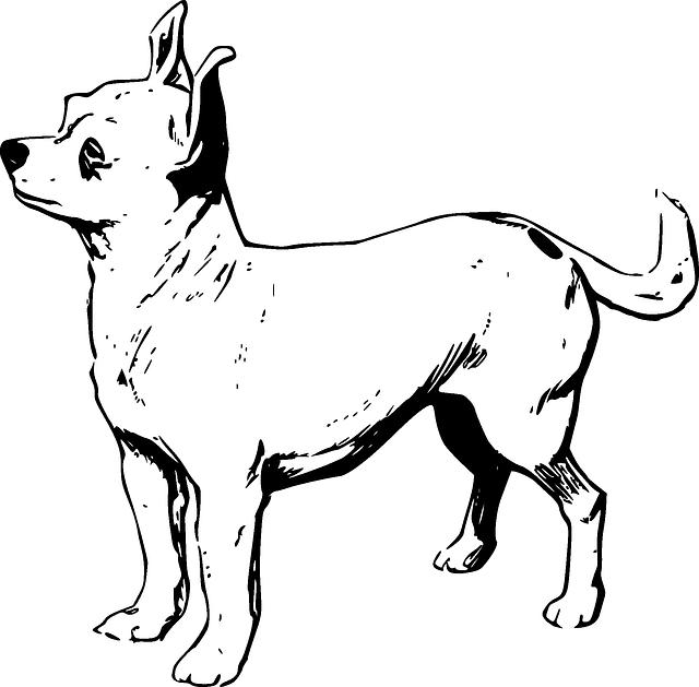 Dog, Pet, Chihuahua, Breed, Domestic, Puppy, Purebred