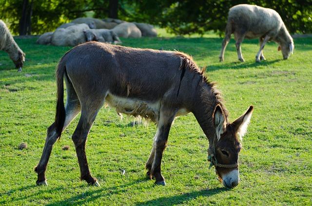 Donkey, Animal, Farm, Livestock, Horse, Cute, Domestic