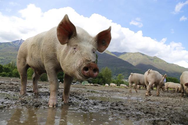 Pig, Sow, Domestic Pig, Livestock, Happy Pig, Farm