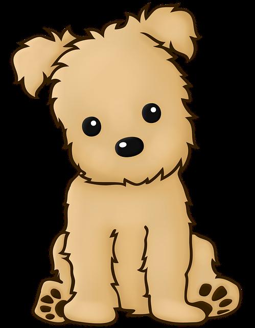 Dog, Sitting, Pet, Domestic, Brown, Race, Yorkie Poo
