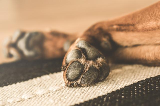 Animal, Dog, Domesticated, Paws, Pet, Dormant, Tired