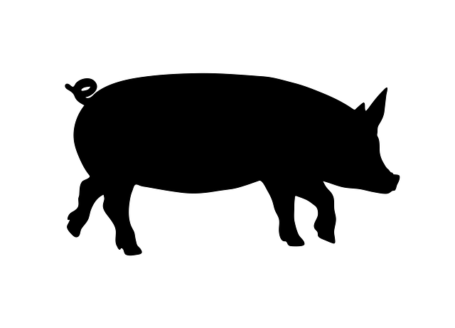 Walk, Walking, Standing, Pig, Animal, Domesticated