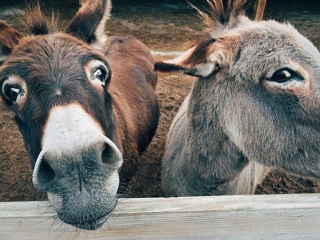 Donkey, Farm, Animal, Ass