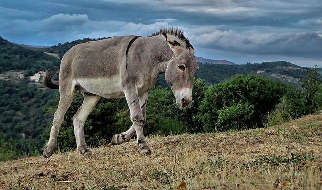 Animals, Farm, Animal, Closed Nature, Donkey, Nature