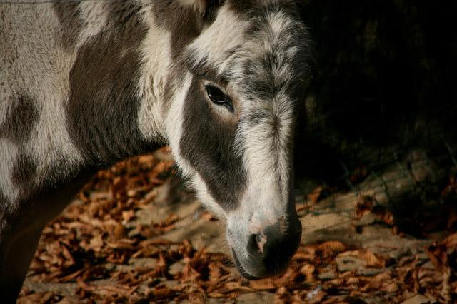 Pet, Donkey, Patched