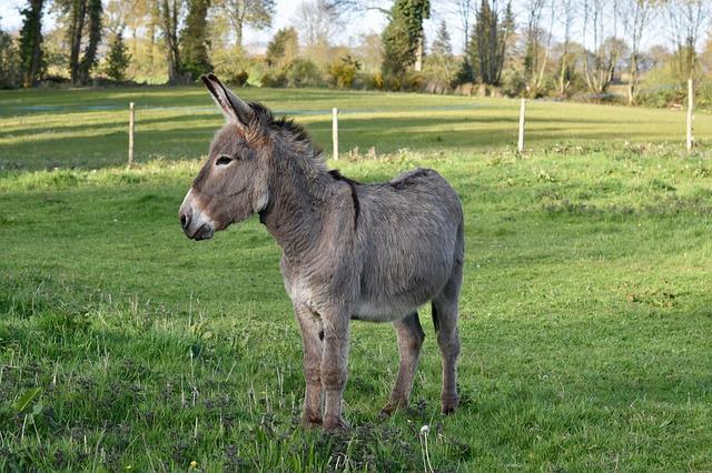 Donkey, Colt, Equine, Animal, Nature, Prairie, Pre