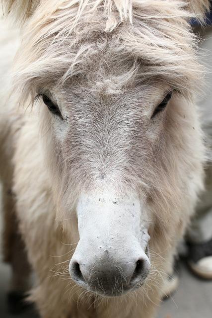 Donkey, Animal, White, 0, Nature, Rural