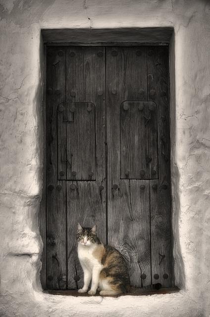 Cat, Animal Home, Mammal, Door