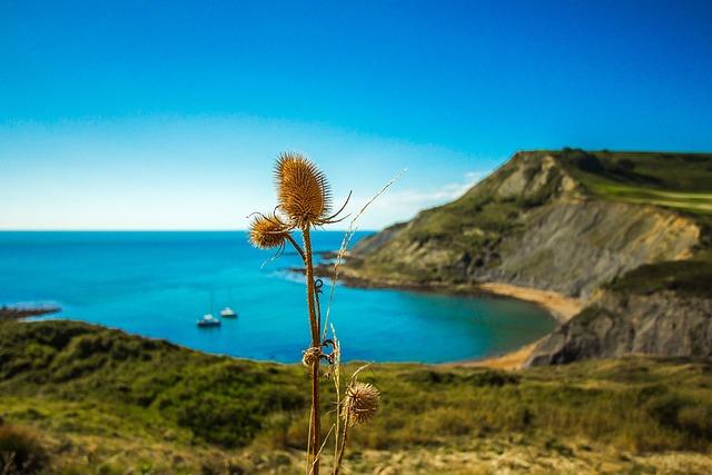 Thistle, Nature, Ocean, England, Dorset
