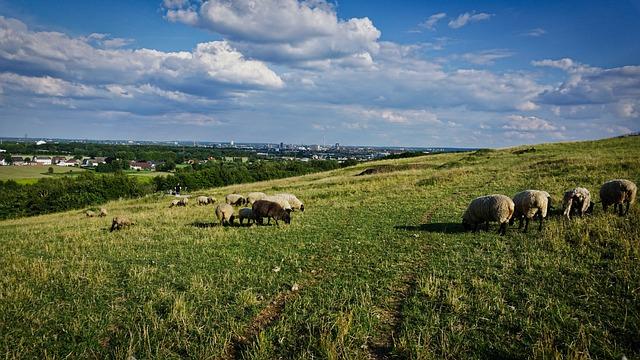 Dortmund, Dump, Sheep, Landscape
