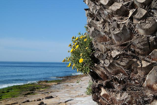 Portugal, Algarve, Praia Da Luz, Dos Prescadores