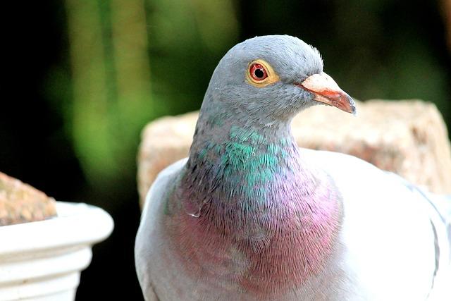 Dove, Bird, Animal, Feather