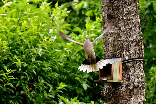 Dove, Bird, Food, Birds, Feather, Animal, Nature