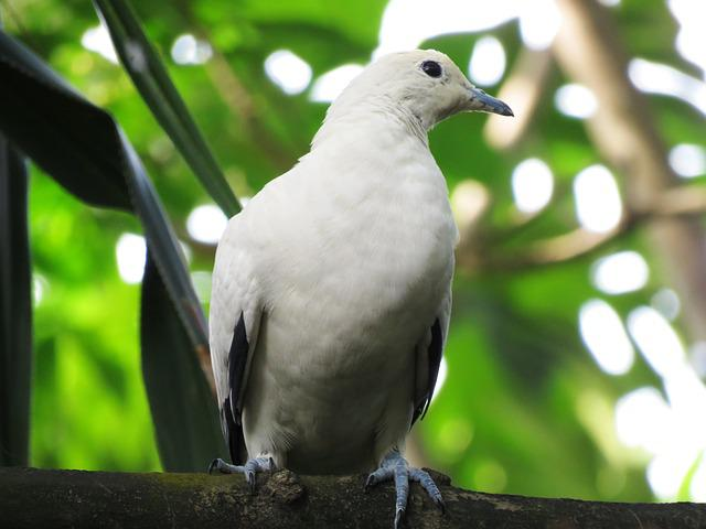 Dove, Bird, Colorful, Tree Branch Sitting, Rest, White