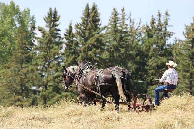 Horses, Draft Team, Agriculture, Horsepower, Nature