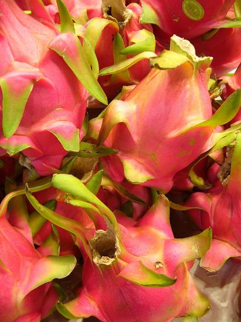 Dragon Fruit, Pitaya, Fruit, Exotic Cactus Greenhouse