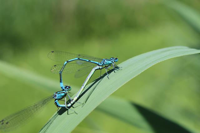 Dragonflies, Insect, Close, Flight Insect