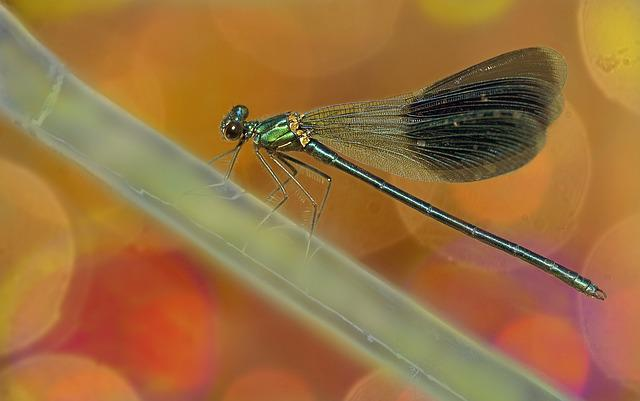 Dragonfly, Nature, Macro, Dragonflies, Insect, Spring