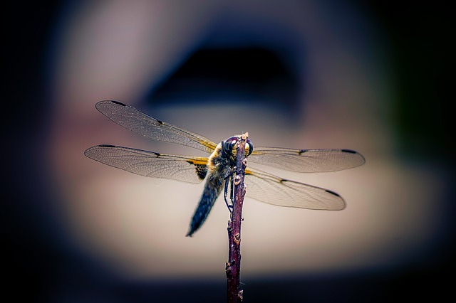 Insect, Fly, Dragonfly, Wing, Nature, Animal World
