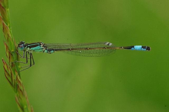 Dragonfly, Insect, Animal, Blue Dragonfly, Close, Macro