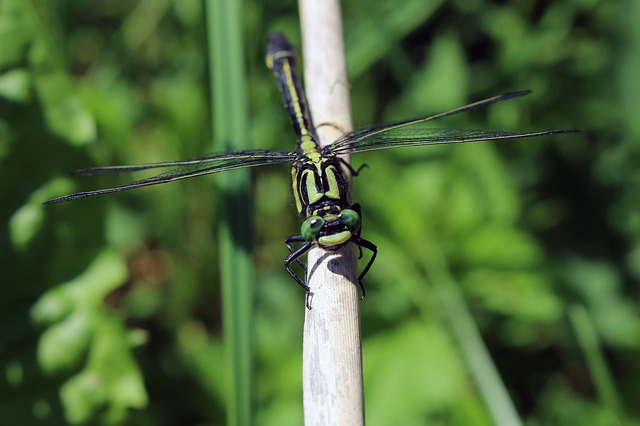 Dragonfly, Insect, Close, Flight Insect, Creature
